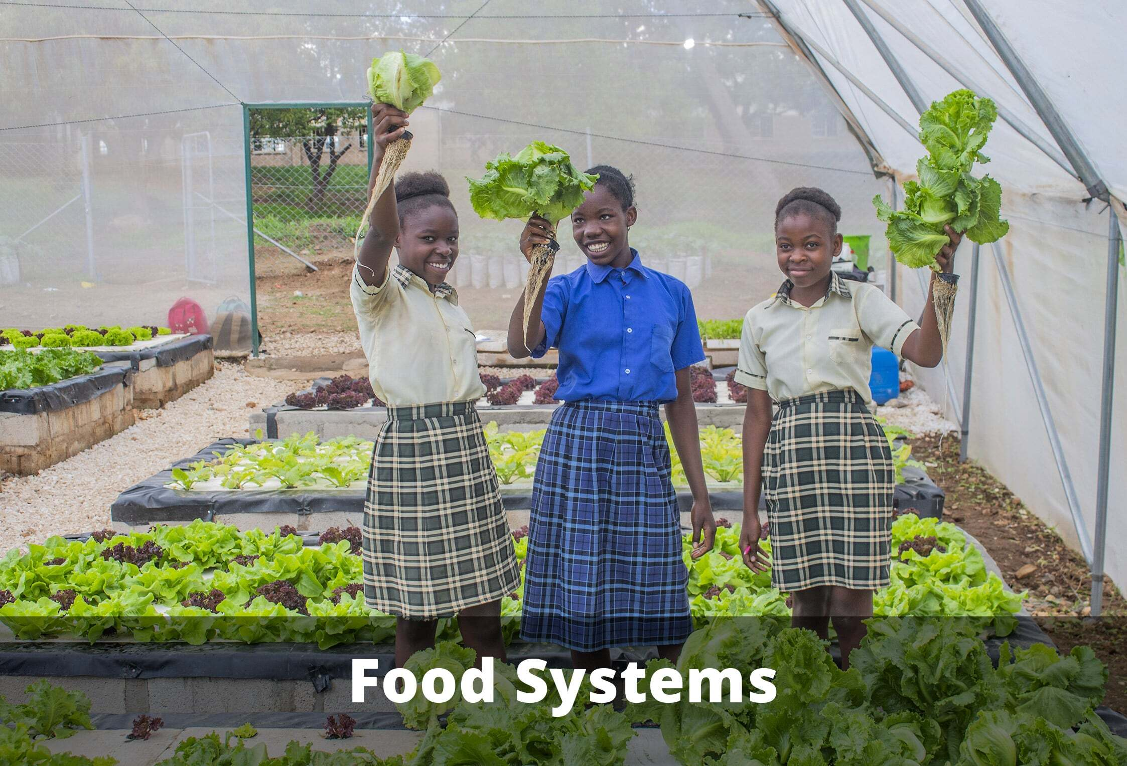Food systems thumbnail