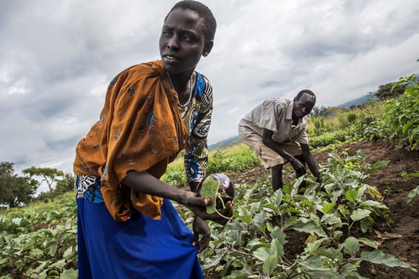 Photo: WFP/ Photogallery, family in a vegetable garden in Budi eastern Equatoria