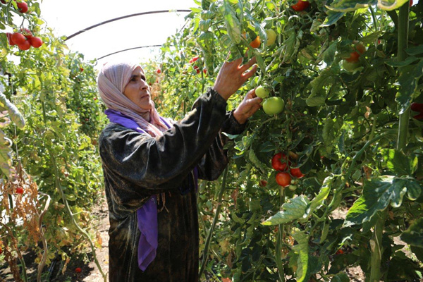 Syria Food Production At All-Time Low
