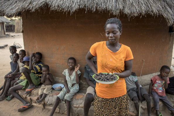 Photo: WFP/Matteo Cosorich, woman holding a plate of cicadas which the family eats when WFP food has run out.