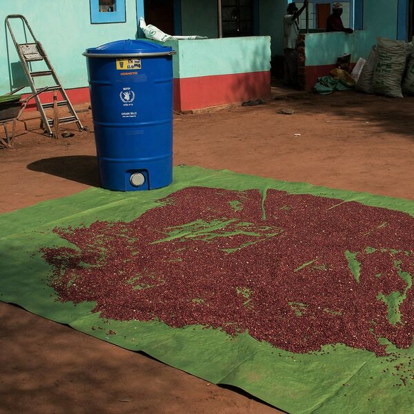WFP trains farmers to reduce post-harvest losses by  using affordable technologies such as tarpaulins for harvesting and drying crops and airtight silos for storing harvested crops. Photo: WFP/Alessandro Abbonizio