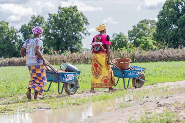 Women moving produce in wheelbarrows