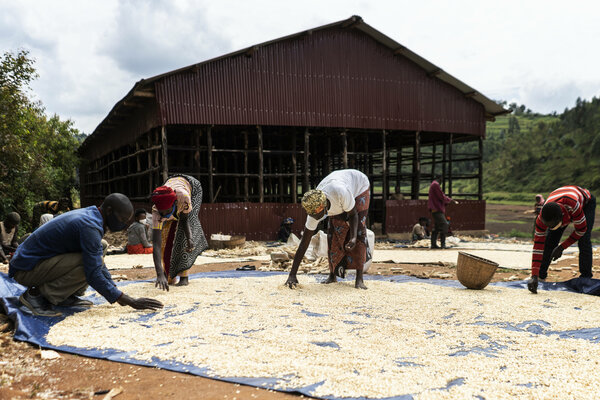 People drying maize