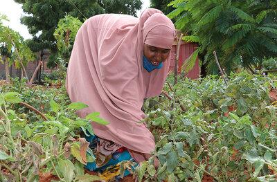 Fardosa Bagoi picks tomatoes from Habiba's farm
