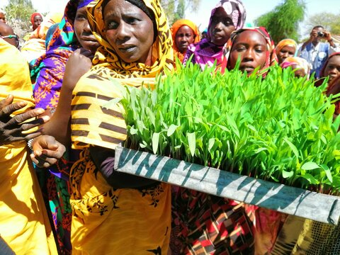 Growing plants without soil in Sudan