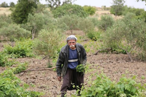 Farming at the age of 70 was not part of Shareef's retirement plan