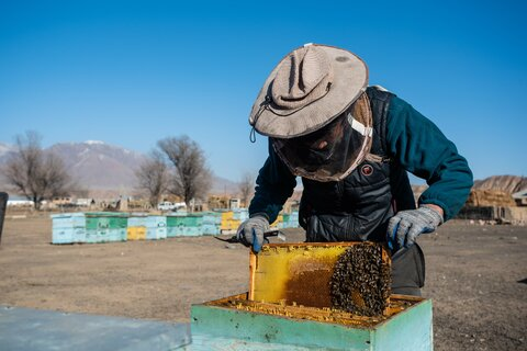 To bee or not to bee in Kyrgyzstan