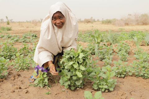 Restoring lives and livelihoods amidst Nigeria's conflict