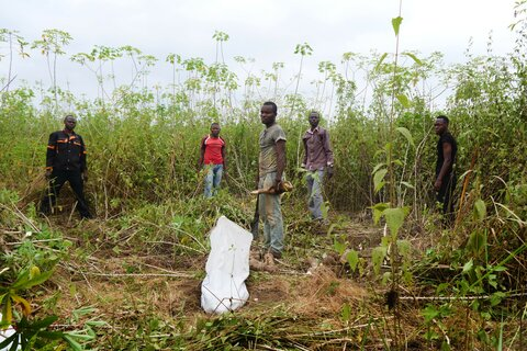 Cassava at the crossroads in Congo