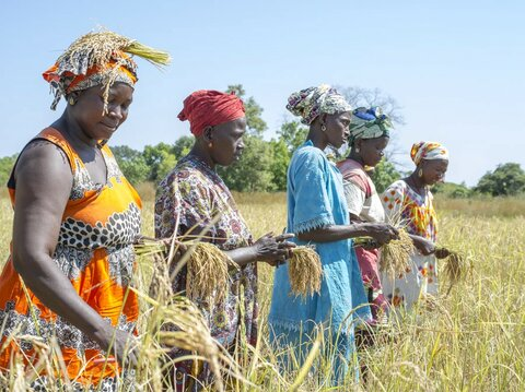 Senegal: Cow dung proves 'green gold' for the women of Kolda