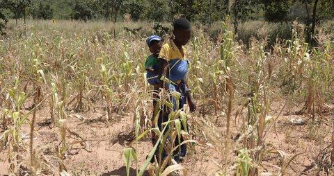 How drought is killing Zimbabwe