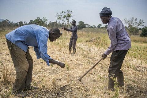 DRC refugees in Uganda sow community ties amid urgent funding shortfall
