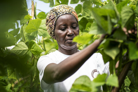 Smallholder farmers in Rwanda expand into commercial markets with WFP's support