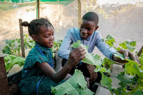 Zambia: Youth changing lives one plant at a time