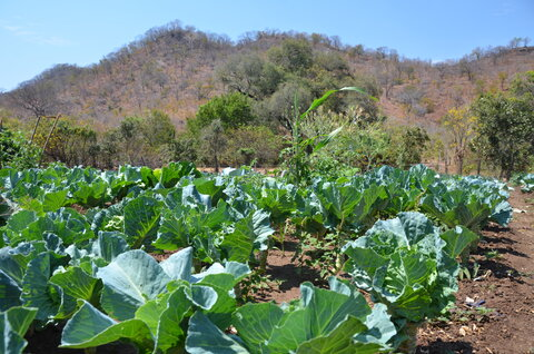 World Food Day: The mountain that keeps on giving in Zimbabwe