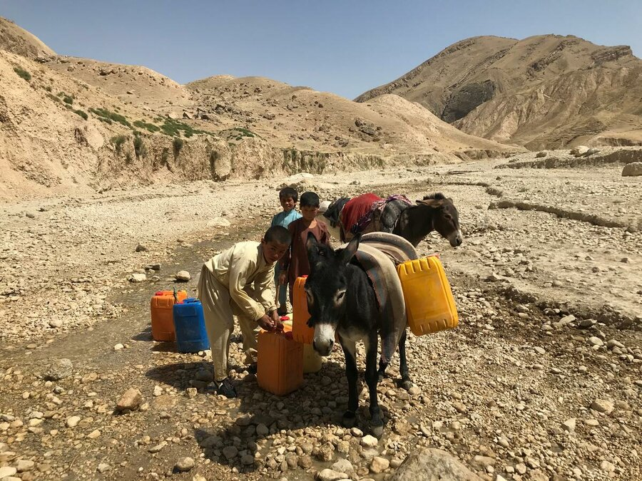 Boys with donkeys carrying water jerrycans on arid background