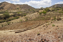 Canada and WFP to support families affected by drought in Central America