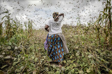 Locusts in East Africa: A race against time