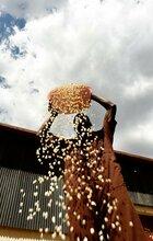 Zero Loss for Zero Hunger: WFP's Work to Prevent Post-Harvest Food Losses