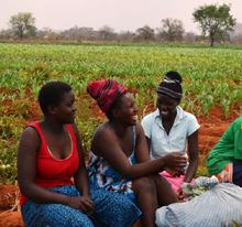 Zimbabwe Annual Report 2014