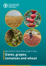 Agricultural value chain study in Iraq – Dates, grapes, tomatoes and wheat - 2021