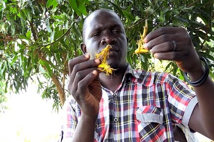 WFP News Video: South Sudan Can't Catch a Break From Hunger-This Time It's Locusts (For the Media)