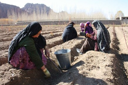 From seed to hiking trail in Bamyan