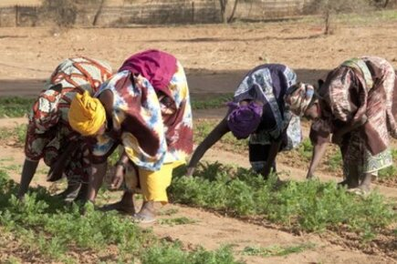 Families In Senegal Learn To Live With A Changing Climate