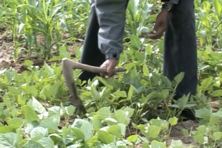 Ethiopian farmer says things looking up with P4P