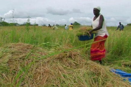 Purchase For Progress In Uganda