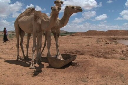Somalia: Livestock Farmer Begins To Recover From Drought